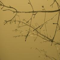 Sepia Tone Tree Branch